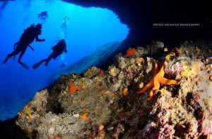Leila Diving - Capo Figari | Adolfo Maciocco Photography