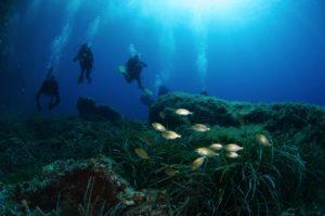 immagine immersione subacquea a tavolara