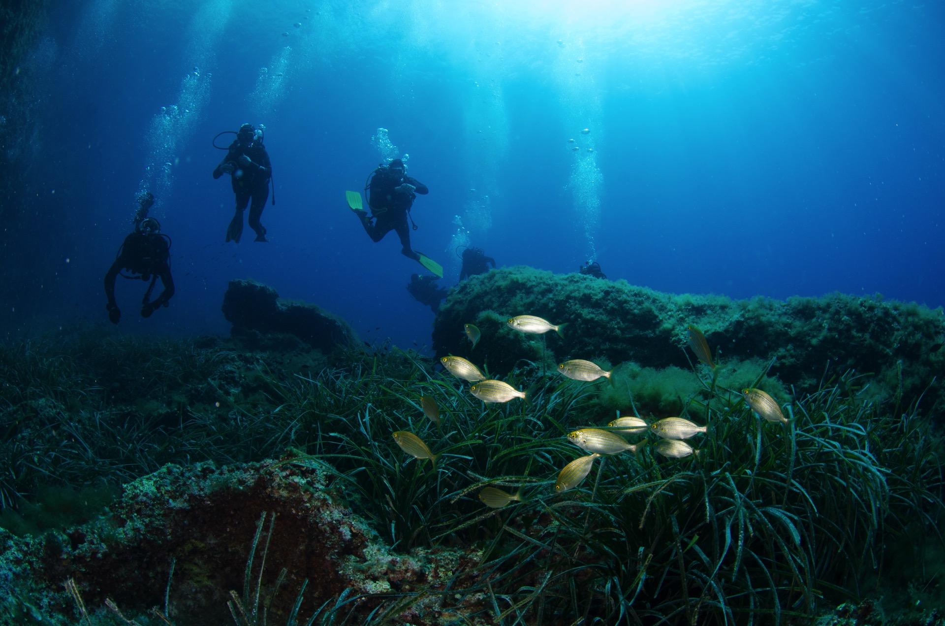 immagine immersione subacquea a Tavolara - foto di Adolfo Maciocco - Leila  Diving Center